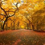 L'automne à New York : les 5 meilleurs endroits pour en profiter !