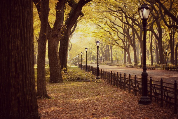 central park automne