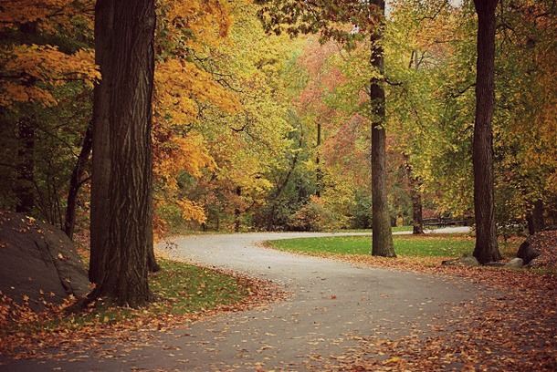 NYBG automne 2