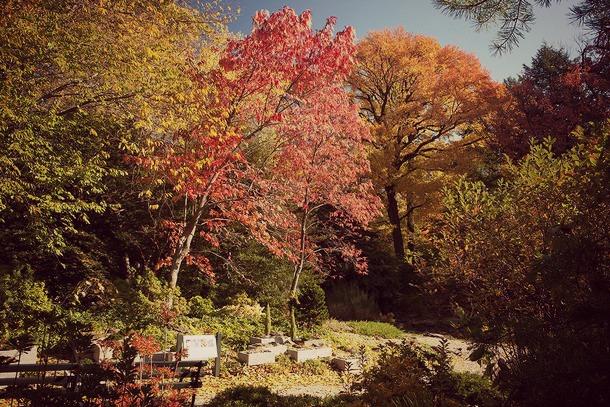 NYBG automne 3