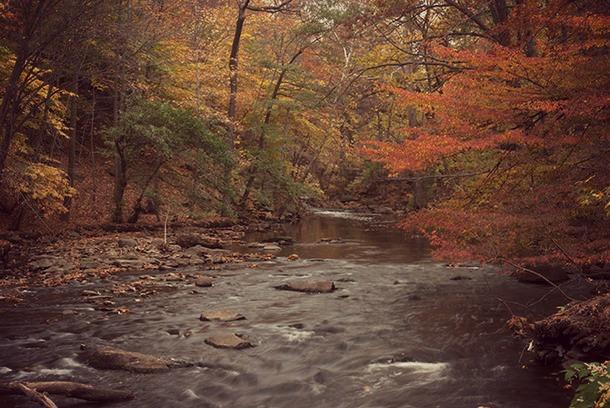 NYBG automne