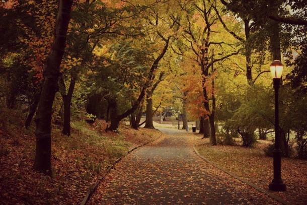 VAN CORTLANDT PARK automne 2