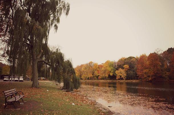 VAN CORTLANDT PARK automne